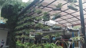 Vertikal Garden di SD IIS PSM Magetan