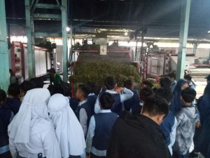 Belajar produksi teh di pabrik