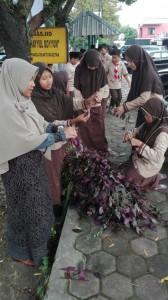 Memotong batang tanaman yang akan ditanam
